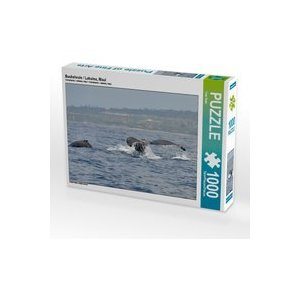 Calvendo Buckelwale / Lahaina, Maui 1000 Teile Puzzle quer 640x480mm, Bade Uwe 7301492
